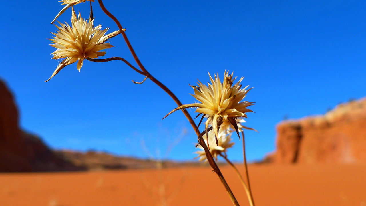 Desert Flower Landscape Mountains